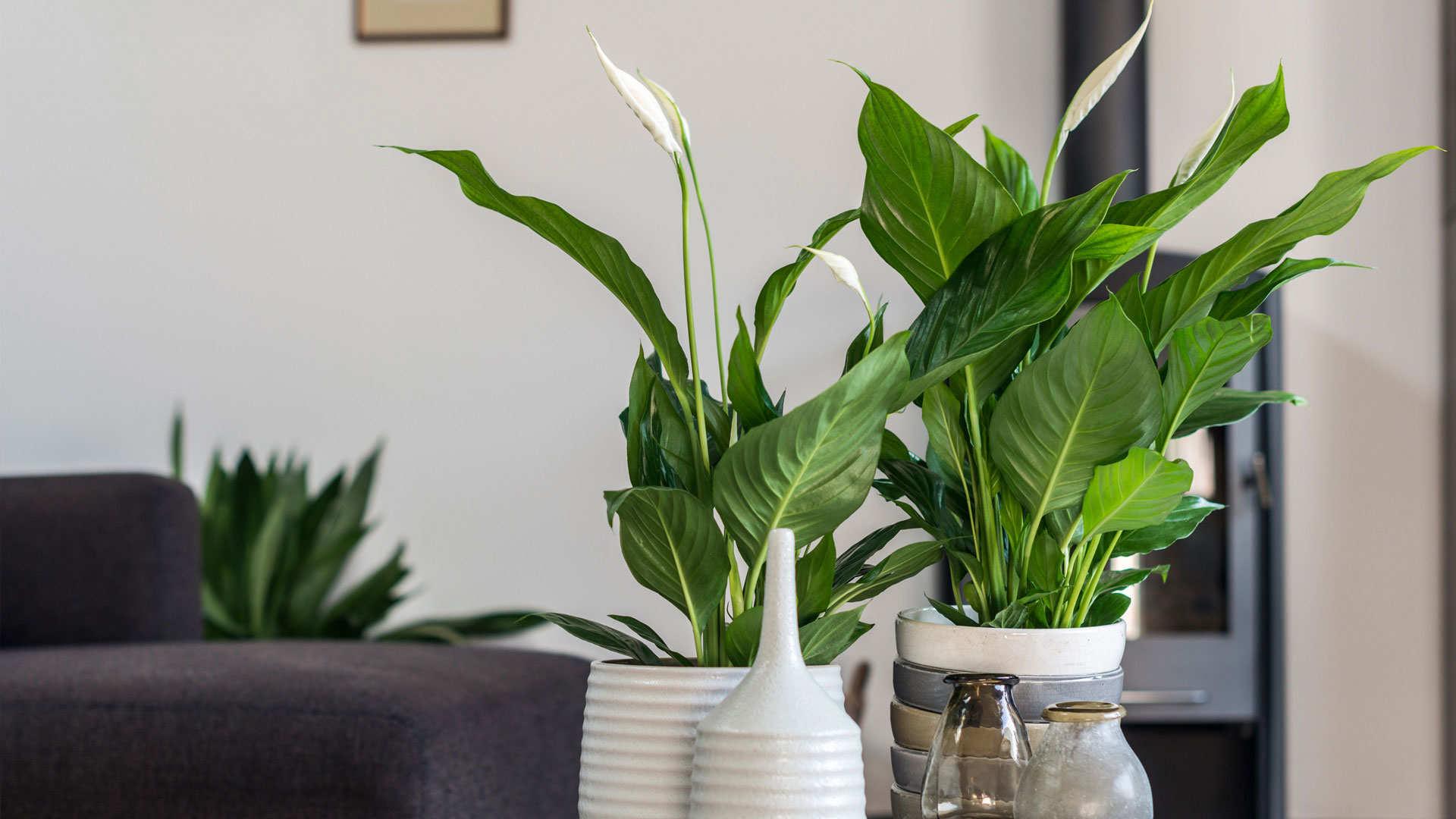 Waarom kamerplanten in huis?